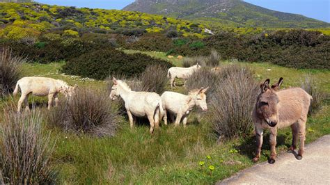 animali da cortile elenco rischiano l estinzione razze di asini mucche pecore