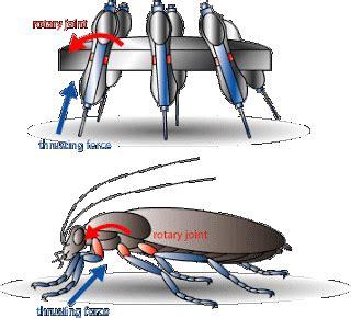 membuat robot capung serangga dan teknologi pusat informasi serangga indonesia