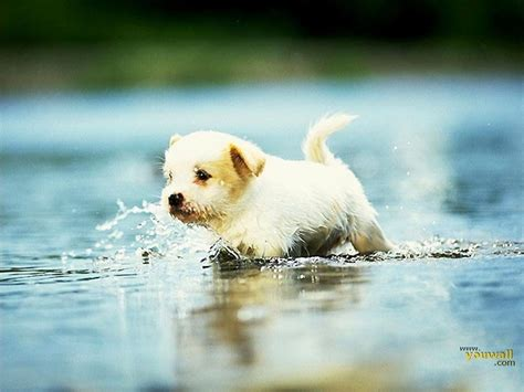 cute dog wallpapers cute dog wallpapers wallpaper cave