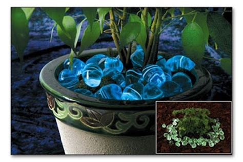 Glow Rocks Garden Moon Rock Front Walkway And Blue Moon On Pinterest