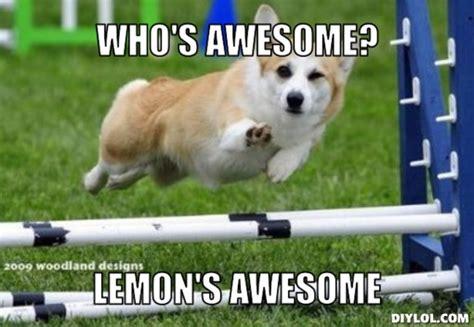 Dog Meme Generator - new rg layout genius