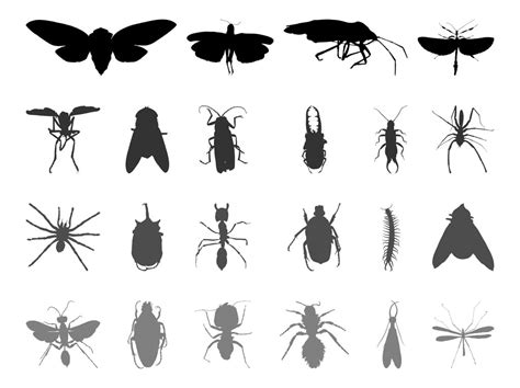 Insect Silhouettes Vector Art & Graphics | freevector.com