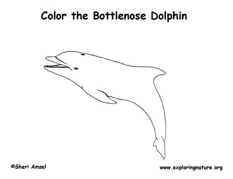Coloring Page Of Bottlenose Dolphin | bottlenose dolphin coloring page exploring nature