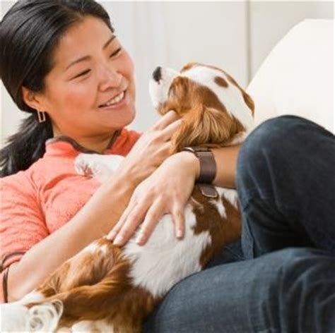 ringworm shoo for dogs canine ringworm