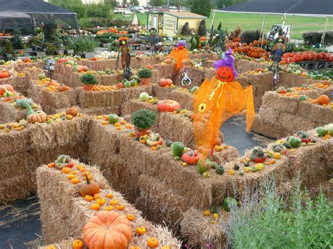 festival decorations fall festival to feature hayride maze petting zoo blue