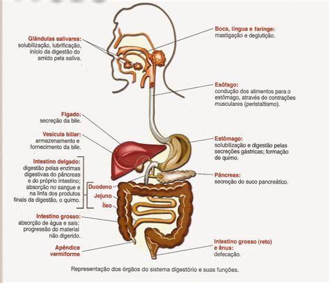 vestibulo biliar tudo sobre fisiologia do exerc 237 cio sistema gastrointestinal