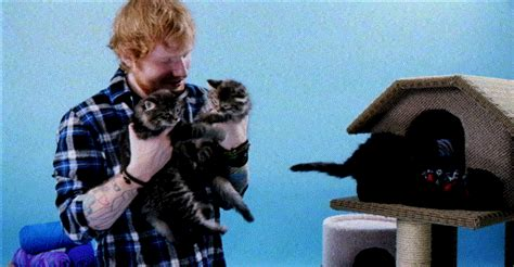 ed sheeran cats ed sheeran and kittens are what dreams are made of