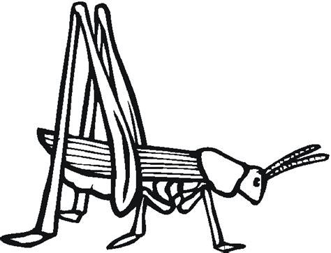 grasshopper printable coloring pages
