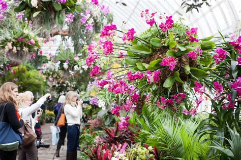 new york orchid show things to do in london in february 2016 la vie zine
