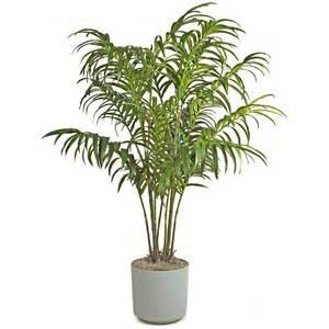 plante tropicale interieur palmier