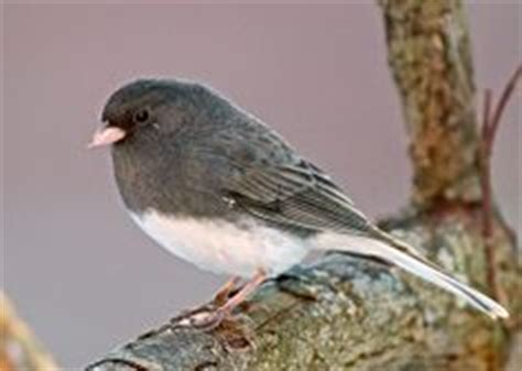 backyard birds virginia native birds of west virginia master naturalists of wv