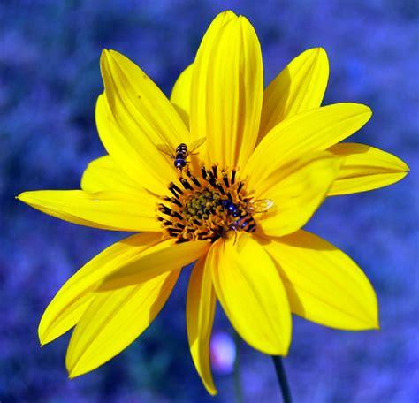 imagenes de flores variadas fotos de flores flores silvestres variadas