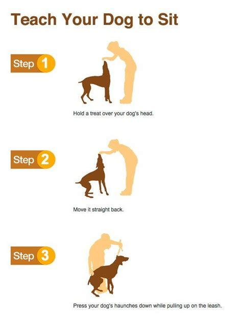 how to a to sit teach your to sit cani