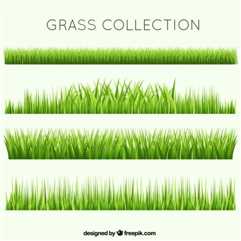 vector grass tutorial different garden grass collection vector free download
