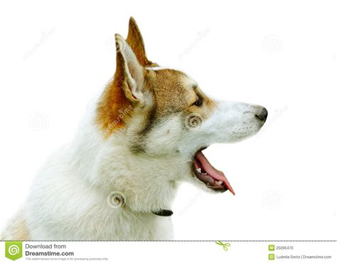 your purebred puppy purebred stock photo image 25095470