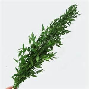 italian ruscus make a bridal bouquet inserting italian ruscus leaves
