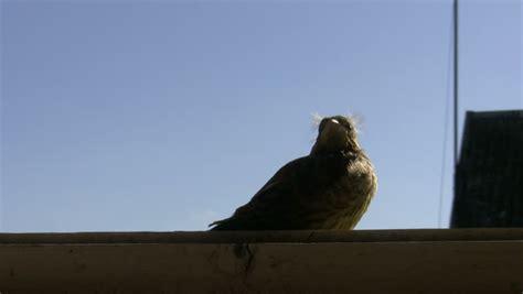little baby bird is sitting on a windowsill against blue