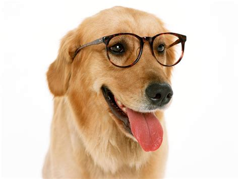 smart dogs smart animal picture
