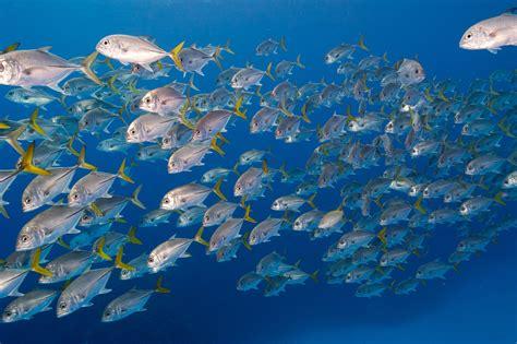 islas caiman bancos buceo buceando en los naufragios de las islas caim 225 n