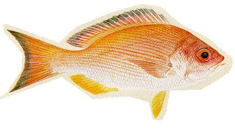 Mesin Giling Ikan Asin ikan hias foto ikan air asin