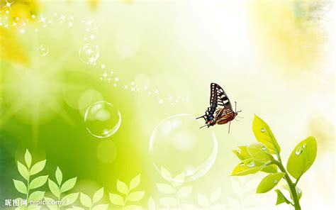 natural korean wallpaper with leaves loves butterfly 清新背景设计图 树木树叶 生物世界 设计图库 昵图网nipic com