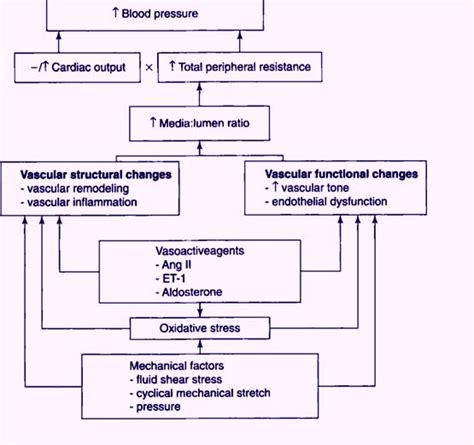 how to make a pathophysiology diagram pathophysiology of hypertension flowchart flowchart in word