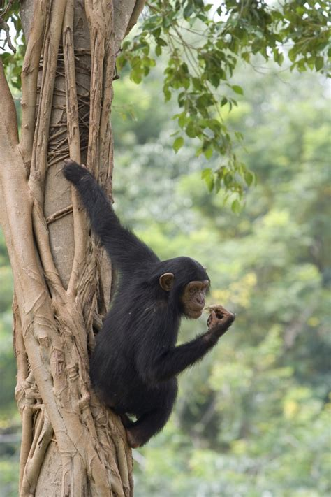 junk dna defines differences  humans  chimps