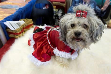 images from the 140th westminster kennel club show
