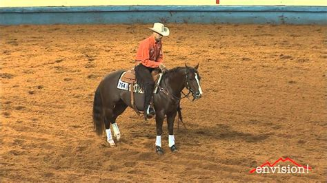 how to a working cow stressolena jr working cow aqha world show brandon staebler