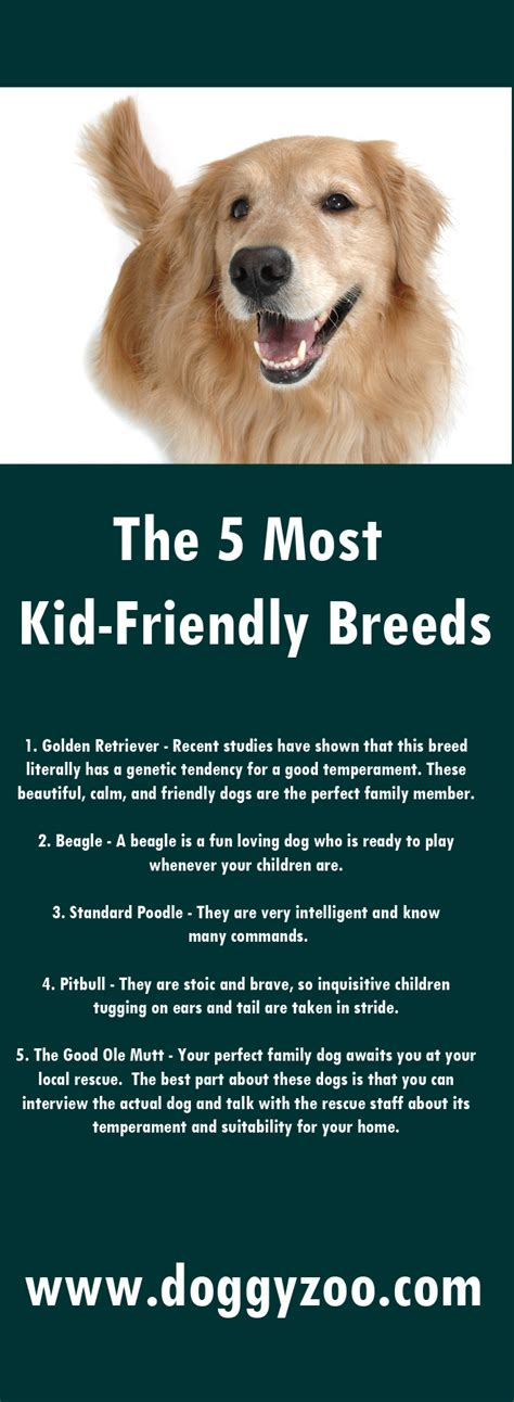 kid friendly breeds the 5 most kid friendly breeds doggyzoo comdoggyzoo