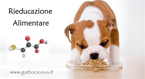 alimentazione bio alimentazione bio compatibile