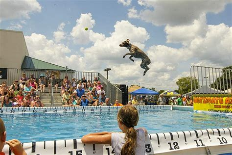 ultimate air dogs air dogs make a splash in contest the blade