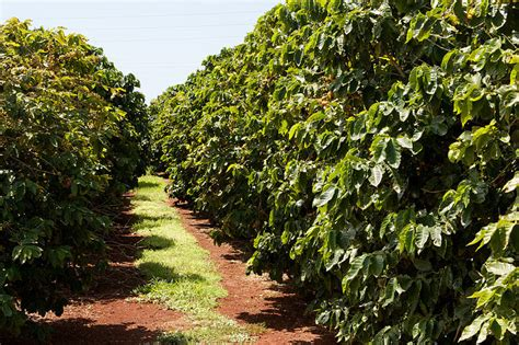 Investing in a coffee plantation. ? Invest it in