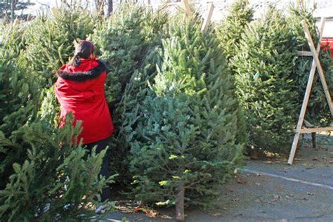 christmas trees on sale at the fire station