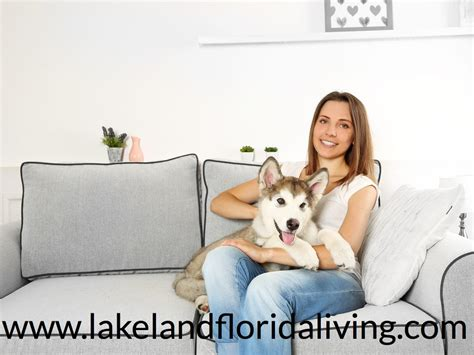 we buy houses lakeland fl will pet friendly remodeling help you sell your home in lakeland fl lakeland real