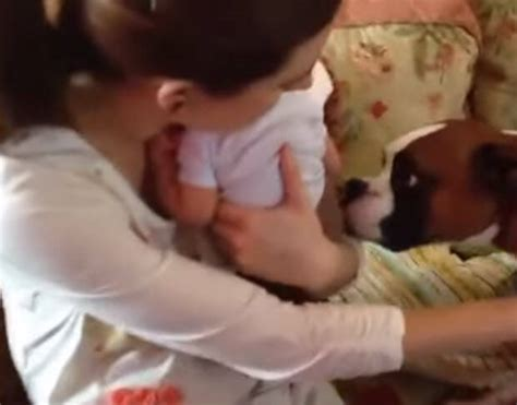 dogs meeting babies awesome these dogs meeting babies for the time is irresistibly blab