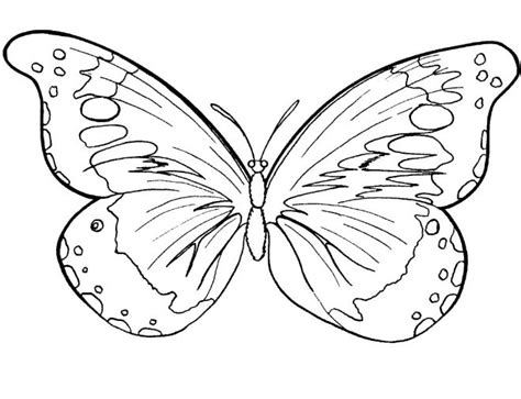 gambar tato kupu kupu hitam 20 gambar sketsa kumpulan gambar sketsa bunga