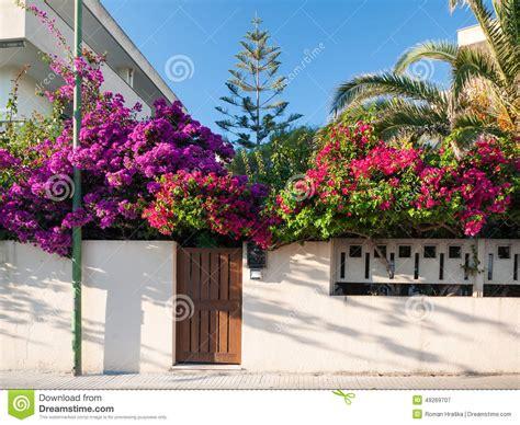 mediterranean flowering shrubs mediterranean flower garden stock image image 49269707
