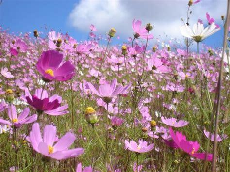 imagenes de jardines maternales arte y jardiner 205 a dise 209 o de jardines jardiner 205 a de flores