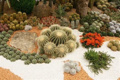 decorar jardin con plantas deserticas jardines desertico en monterrey