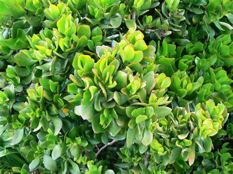 nomi fiori e piante nomi piante e fiori liceo classicou201caristossenou201d