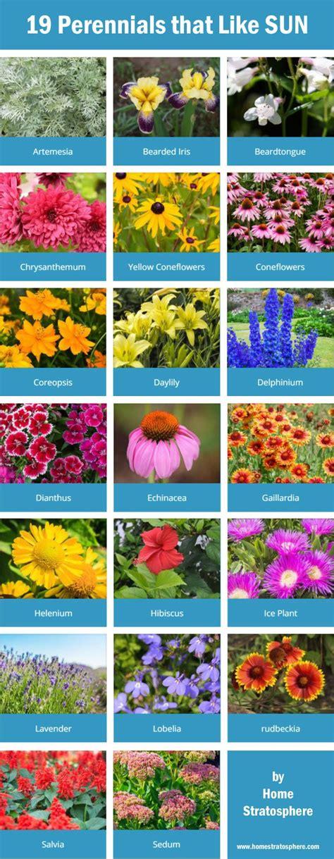 best flowers for the garden 25 best ideas about sun garden on