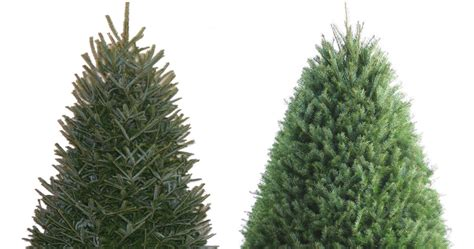 lowes christmas trees prices 25 fresh trees at lowe s today only