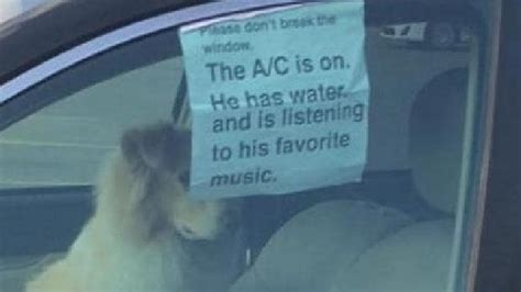 Dog In Car Meme - don t break the window the ac is on memes are