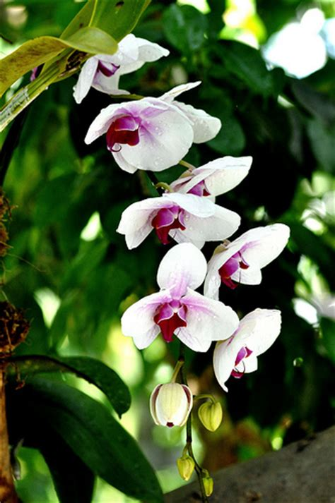 amazon rainforest orchids www pixshark com images orchids flickr photo sharing