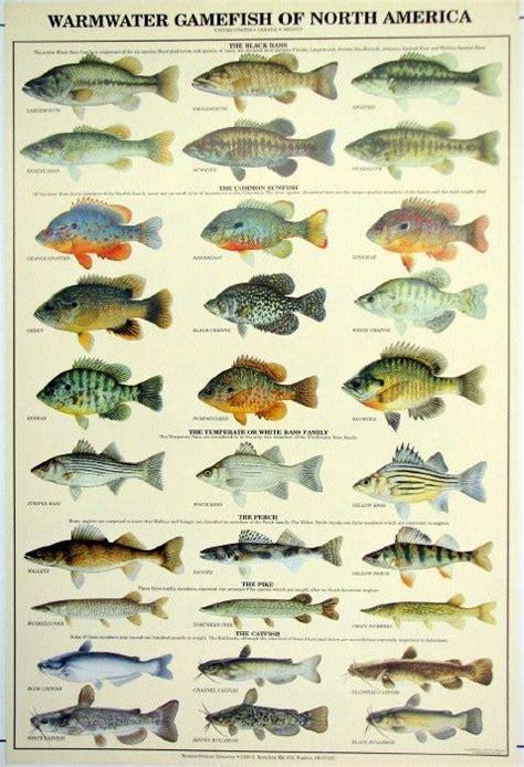 fishing names fish names more photos