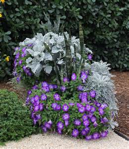 Plant Combination Ideas For Container Gardens Combo Plants Container 3 Dusty Miller 2 Blue Petunia 1 Snake Plant Combo Plants