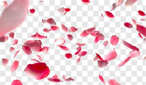 Petal Leaves Drop Longsleeve Top 11 psd petals images falling petals