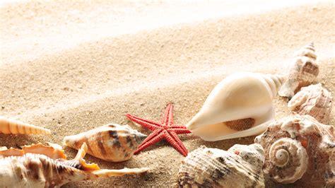 summer wallpaper sand seashells and starfish chainimage