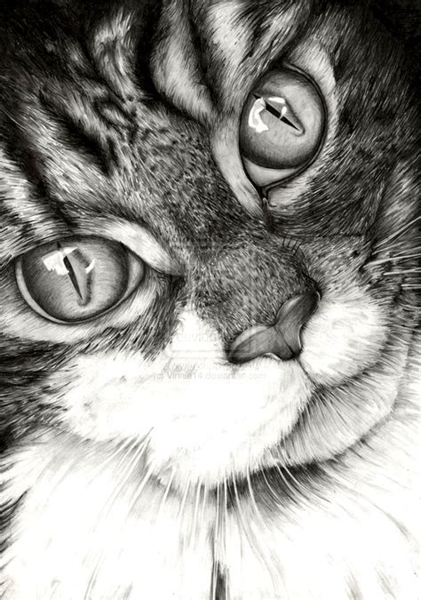 30 amazing realistic pencil drawings visual swirl 30 beautiful cat drawings best color pencil drawings and